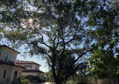Tree and Planter Upgrades 4