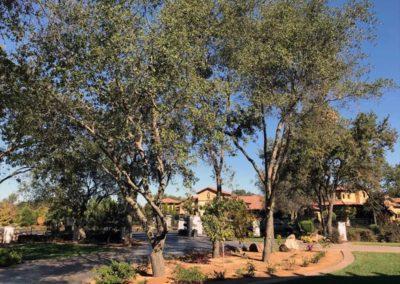 Tree and Planter Upgrades 5