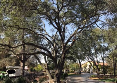 Tree and Planter Upgrades 6